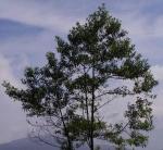 arbre 2r.jpg